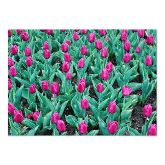 Triumph tulips, hot pink  flowers 13 cm x 18 cm invitation card