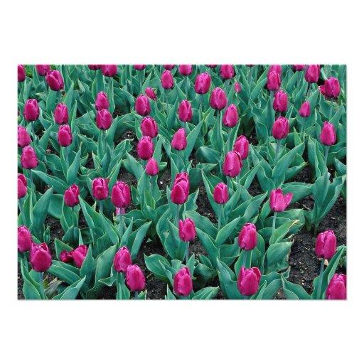 Triumph tulips, hot pink custom invitation