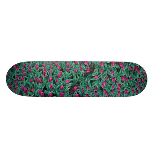Triumph tulips, hot pink skateboard