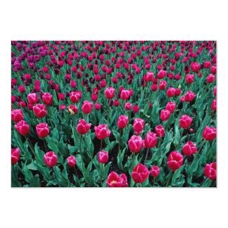 Triumph tulips 13 cm x 18 cm invitation card