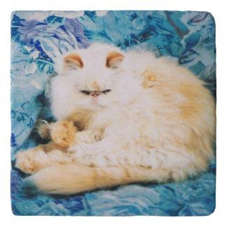 Trivet with Persian Cat