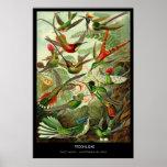 Trochilidae – Plate 99 - Kunstformen der Natur