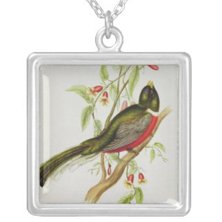 Trogon Ambiguus Silver Plated Necklace