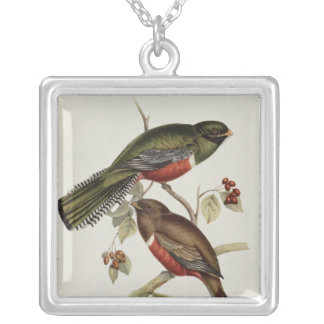 Trogon Collaris Silver Plated Necklace