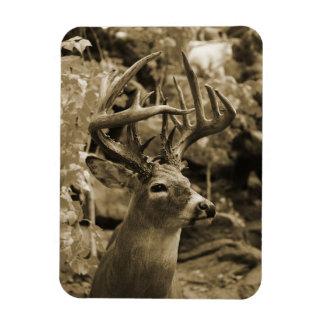 Trophy Deer Magnet
