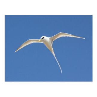 Tropic bird postcard