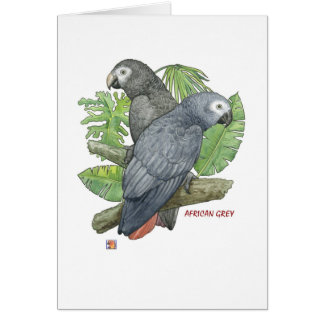 Tropical African Greys Greeting Cards