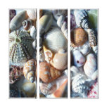 Tropical Beach Shells Photography Canvas Stretched Canvas Print