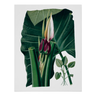 Tropical big leaves botanical print