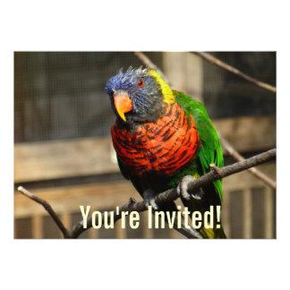 Tropical Bird Invitation Lorikeet Parakeet Custom Invitation