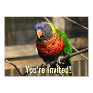 Tropical Bird Invitation Lorikeet Parakeet