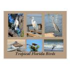 Tropical Birds of Florida Postcard