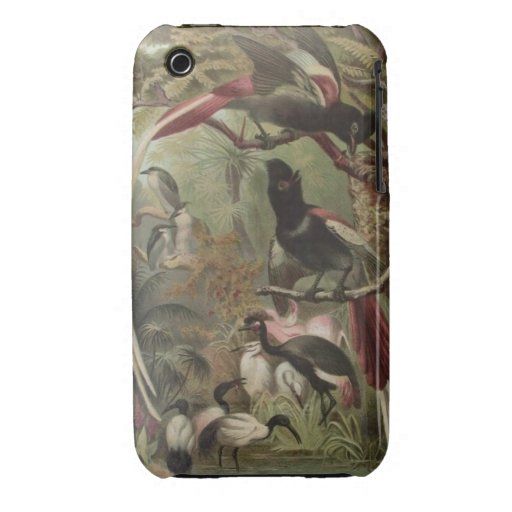 Tropical Birds Phone case For iPhone 3G/3GS iPhone 3 Cover