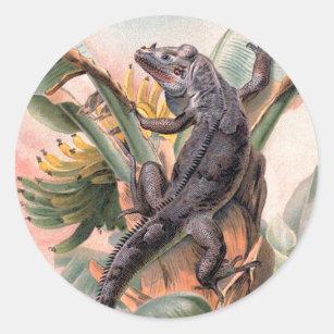 Tropical Black Iguana, Vintage Wild Reptile Animal Classic Round Sticker