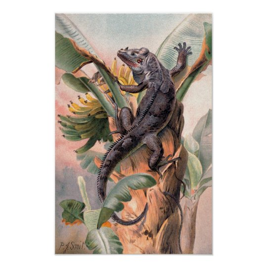 Tropical Black Iguana, Vintage Wild Reptile Animal Poster