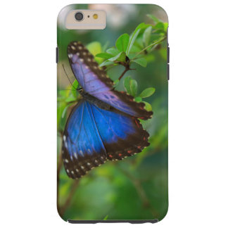 Tropical Blue Butterfly Tough iPhone 6 Plus Case