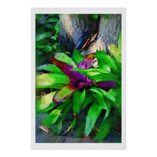 Tropical Bromeliad Poster