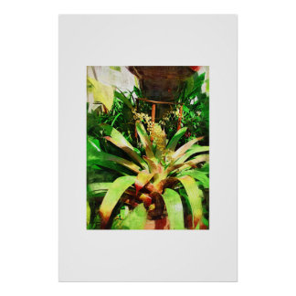 Tropical Bromeliads oil painting collection Poster