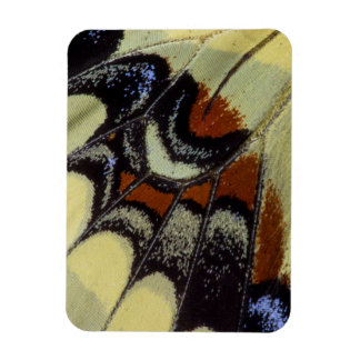 Tropical butterfly close-up rectangular photo magnet