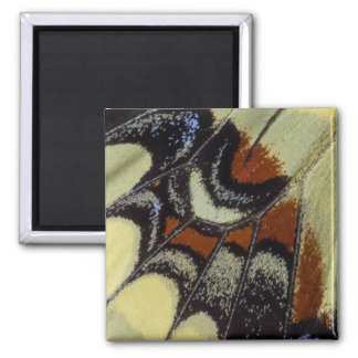 Tropical butterfly close-up square magnet