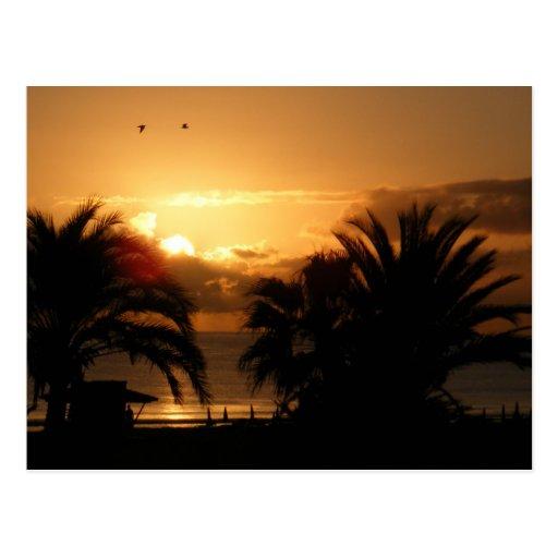 Tropical Canary islands sunrise RIU Postcards