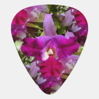 Tropical Cattleya Orchid Flower Guitar Pick