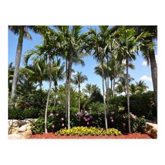 Tropical Coconut Plantation Bonita Springs Florida Postcard