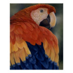 """""""Tropical Cool"""" - Macaw Poster"""