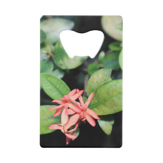 Tropical Exotic Coral Flower, Kew Bottle Opener