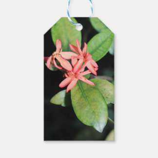 Tropical Exotic Coral Flower Kew Gardens Gift Tags
