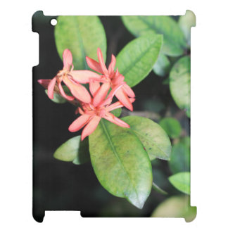 Tropical Exotic Coral Flower Kew Gardens iPad Case