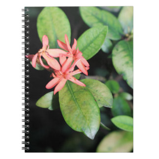 Tropical Exotic Coral Flower Kew Notebook 80 pages
