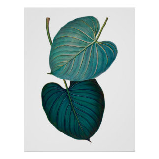 Tropical exotic philodendron leaves poster
