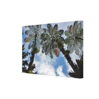 Tropical Fern Palms Canvas Wrap