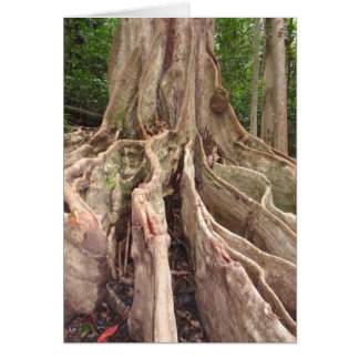 Tropical Fig Tree Roots Card