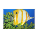 Tropical fish Butterflyfish