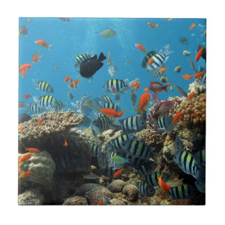 Tropical Fish Chaos Small Square Tile