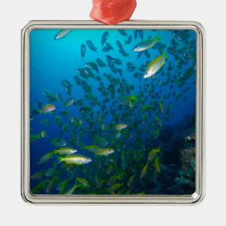 Tropical Fish Great Barrier Reef Coral Sea Silver-Colored Square Decoration