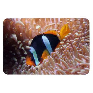 Tropical Fish Magnet