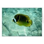 Tropical Fish Notecard