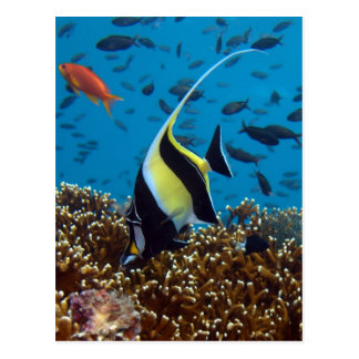 Tropical fish print gifts postcard