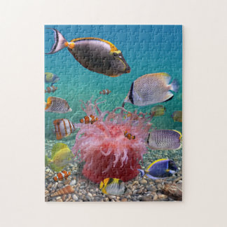 Tropical Fish Puzzle