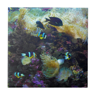 Tropical Fish Small Square Tile