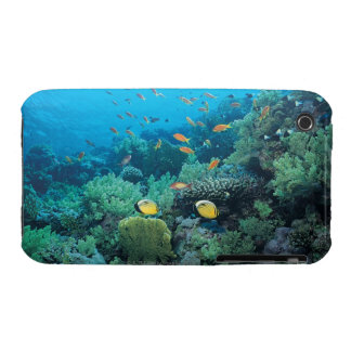Tropical fish swimming over reef iPhone 3 Case-Mate cases