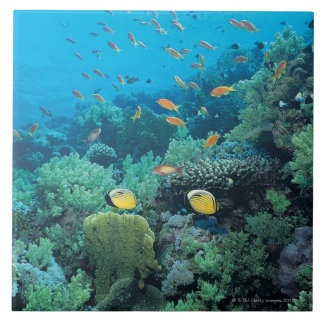 Tropical fish swimming over reef large square tile