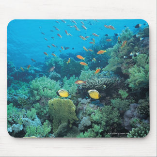 Tropical fish swimming over reef mouse mat