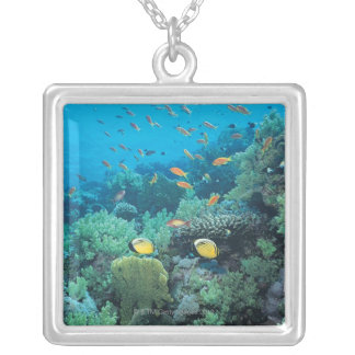 Tropical fish swimming over reef silver plated necklace