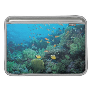 Tropical fish swimming over reef sleeve for MacBook air