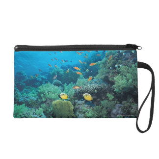 Tropical fish swimming over reef wristlet