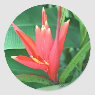 Tropical Flower Bird of Paradise Classic Round Sticker
